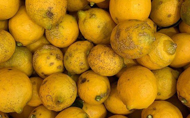 レモンのマーマレードの会